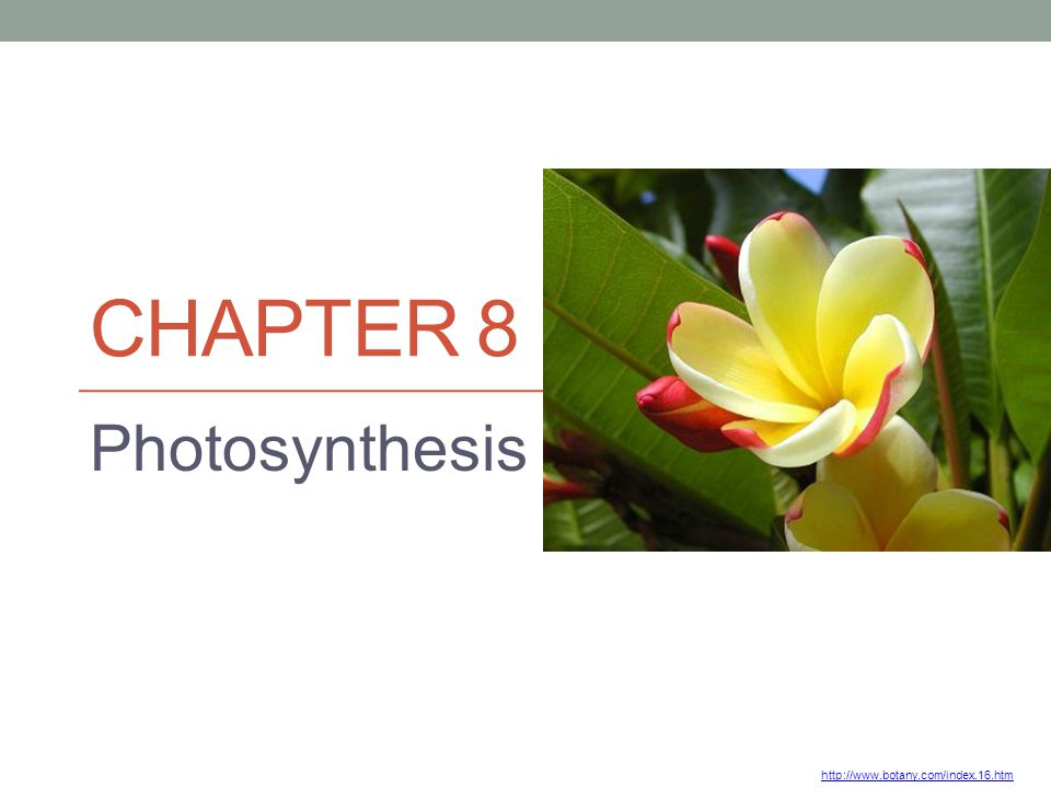 CHAPTER 8 Photosynthesis http://www.botany.com/index.16.htm