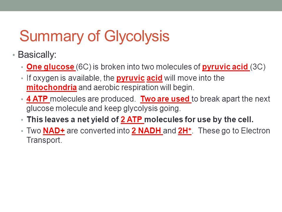 G3P http://science.halleyhosting.com/sci/ibbio/cellenergy/resp/respirnotes/glycolysis2.htm