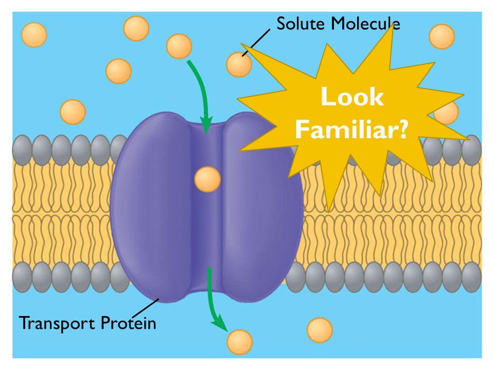 Solute Molecule Transport Protein Look Familiar?