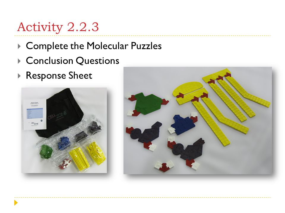 Activity 2.2.3  Complete the Molecular Puzzles  Conclusion Questions  Response Sheet