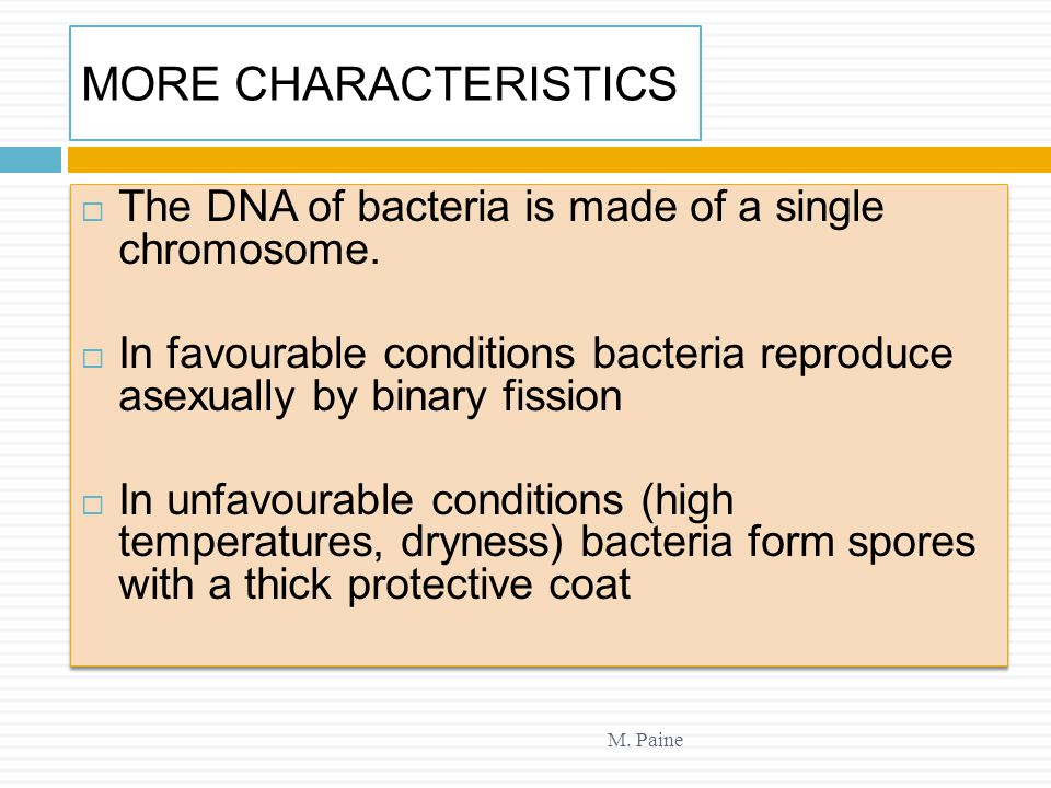 MORE CHARACTERISTICS M. Paine  The DNA of bacteria is made of a single chromosome.  In favourable conditions bacteria reproduce asexually by binary