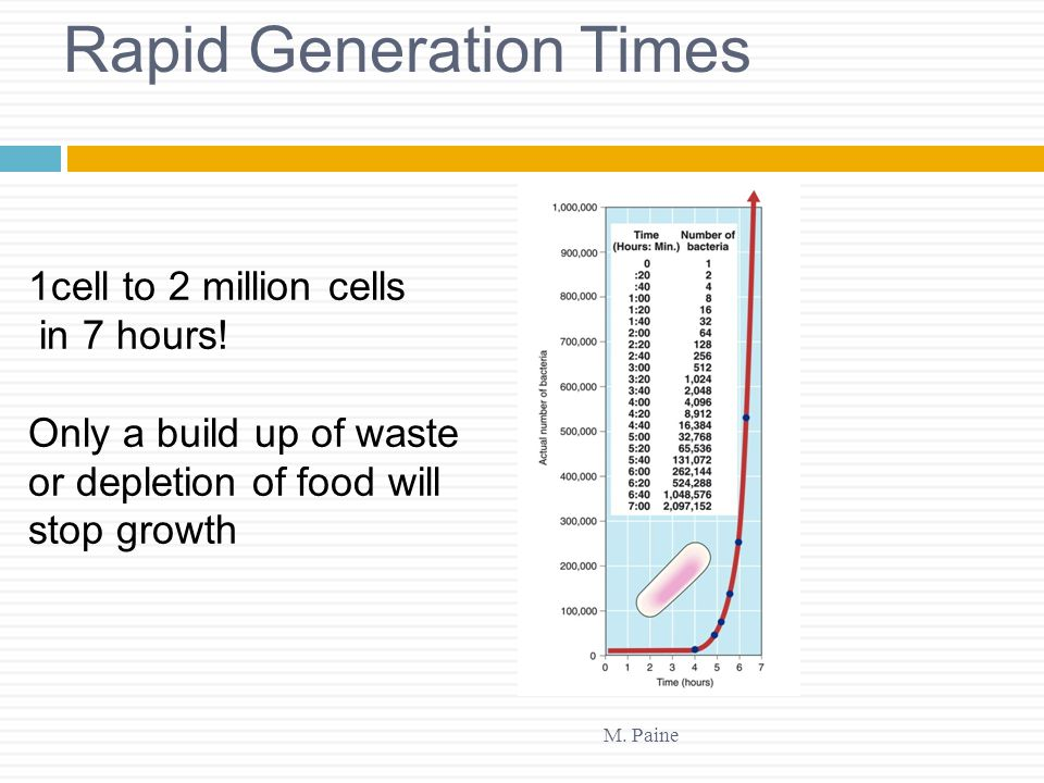 Rapid Generation Times M. Paine 1cell to 2 million cells in 7 hours! Only a build up of waste or depletion of food will stop growth