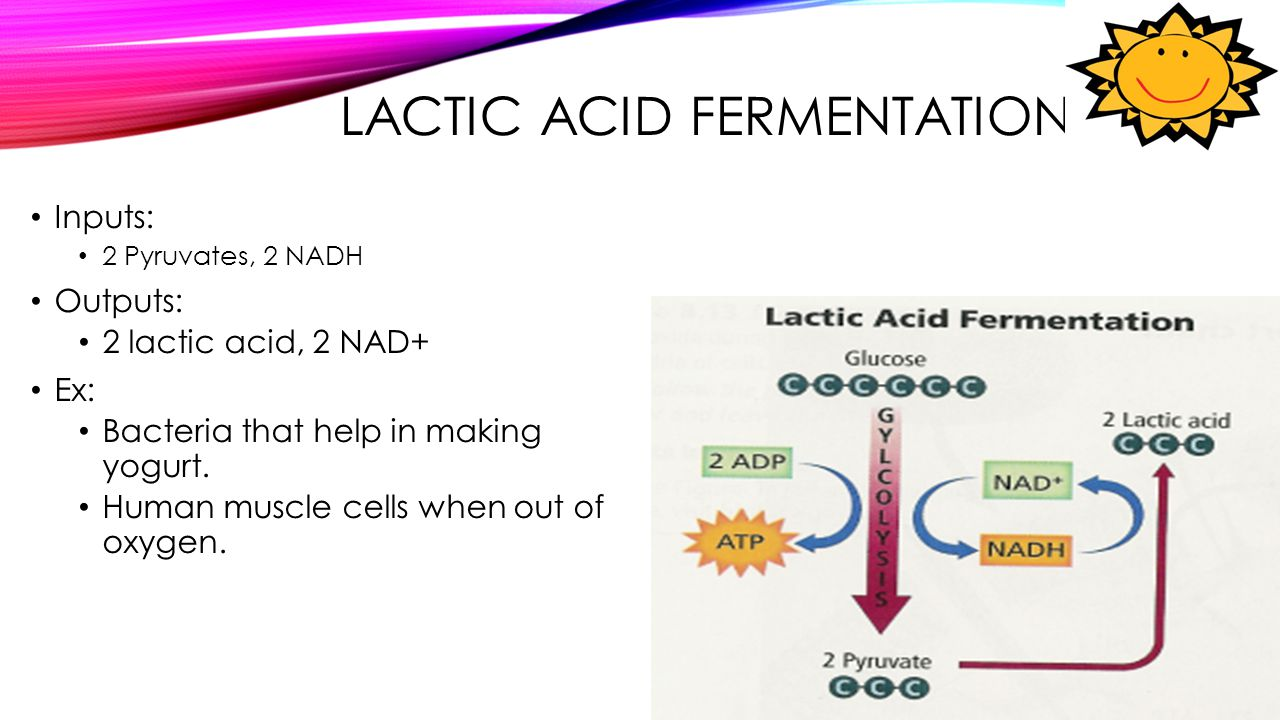 LACTIC ACID FERMENTATION Inputs: 2 Pyruvates, 2 NADH Outputs: 2 lactic acid, 2 NAD+ Ex: Bacteria that help in making yogurt. Human muscle cells when o