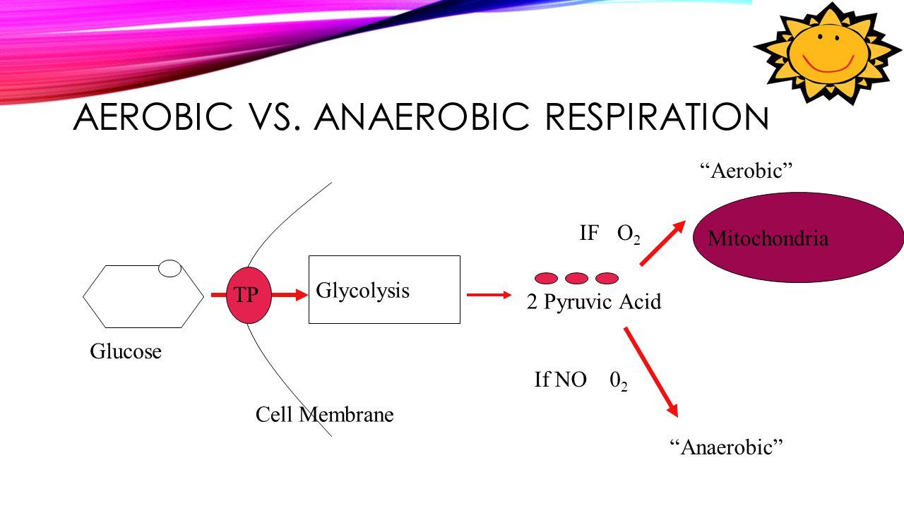 "AEROBIC VS. ANAEROBIC RESPIRATION Glycolysis 2 Pyruvic Acid Glucose Cell Membrane TP O2O2 IF ""Aerobic"" Mitochondria ""Anaerobic"" If NO0202"