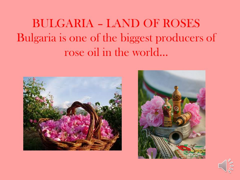 BULGARIA – LAND OF ROSES Bulgaria is one of the biggest producers of rose oil in the world…