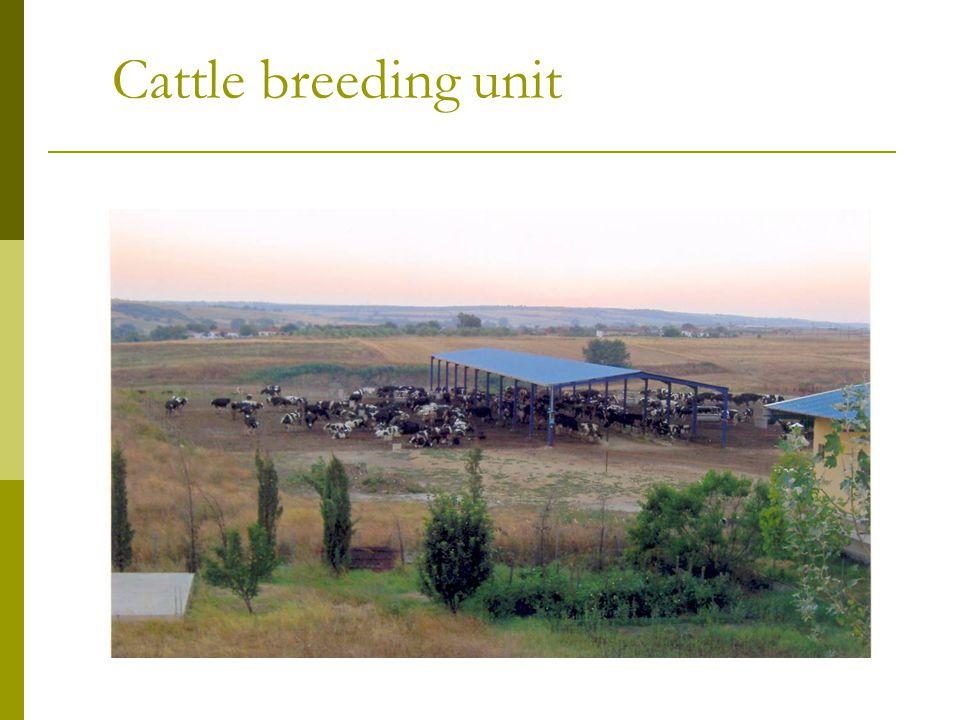 Milk tank in a cattle breeding unit