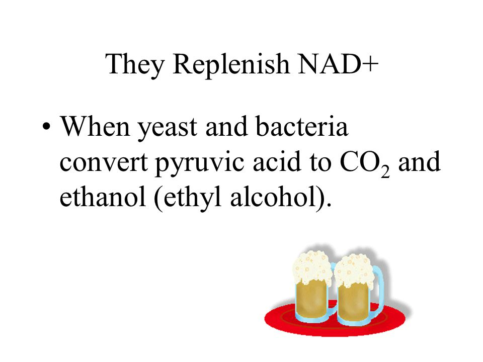 They Replenish NAD+ When yeast and bacteria convert pyruvic acid to CO 2 and ethanol (ethyl alcohol).