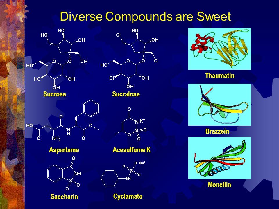Diverse Compounds are Sweet Thaumatin Brazzein Monellin SucroseSucralose AspartameAcesulfame K Saccharin Cyclamate