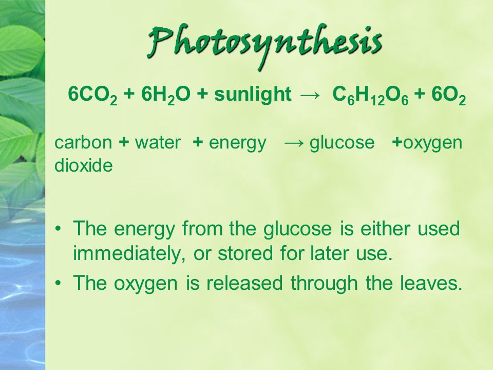 Photosynthesis 6CO 2 + 6H 2 O + sunlight → C 6 H 12 O 6 + 6O 2 carbon + water + energy → glucose +oxygen dioxide The energy from the glucose is either