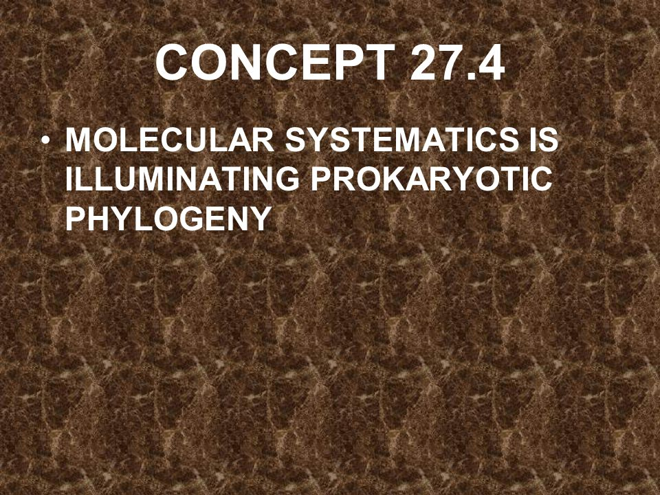 CONCEPT 27.4 MOLECULAR SYSTEMATICS IS ILLUMINATING PROKARYOTIC PHYLOGENY