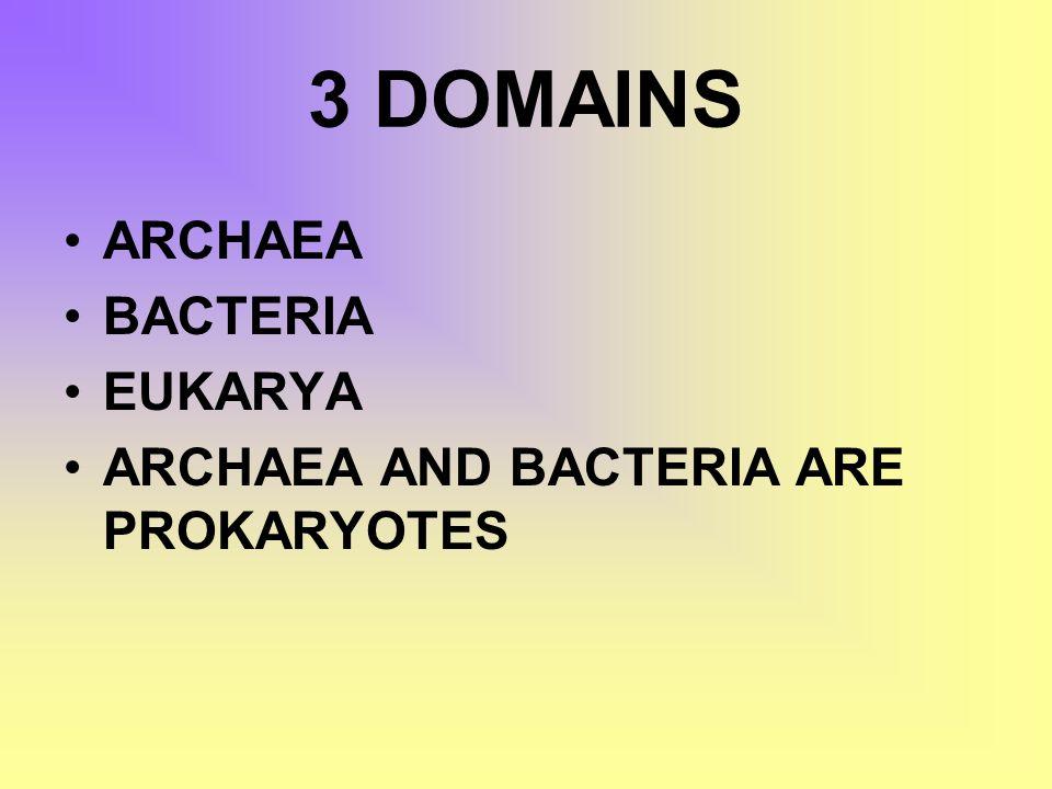 3 DOMAINS ARCHAEA BACTERIA EUKARYA ARCHAEA AND BACTERIA ARE PROKARYOTES