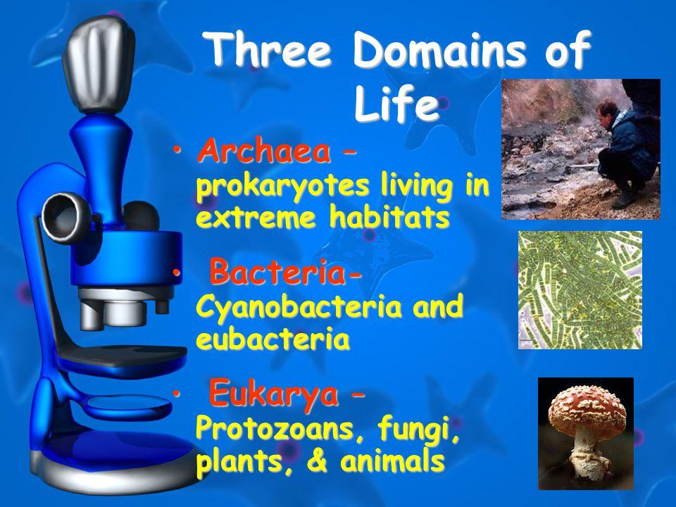 4 Three Domains of Life Archaea – prokaryotes living in extreme habitatsArchaea – prokaryotes living in extreme habitats Bacteria - Cyanobacteria and