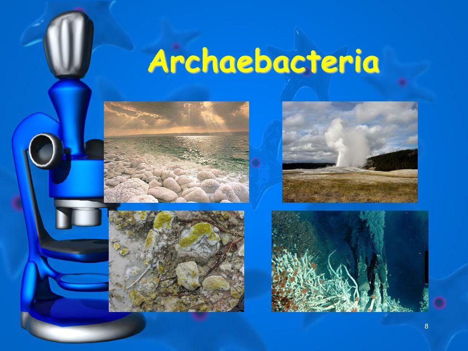 8 Archaebacteria