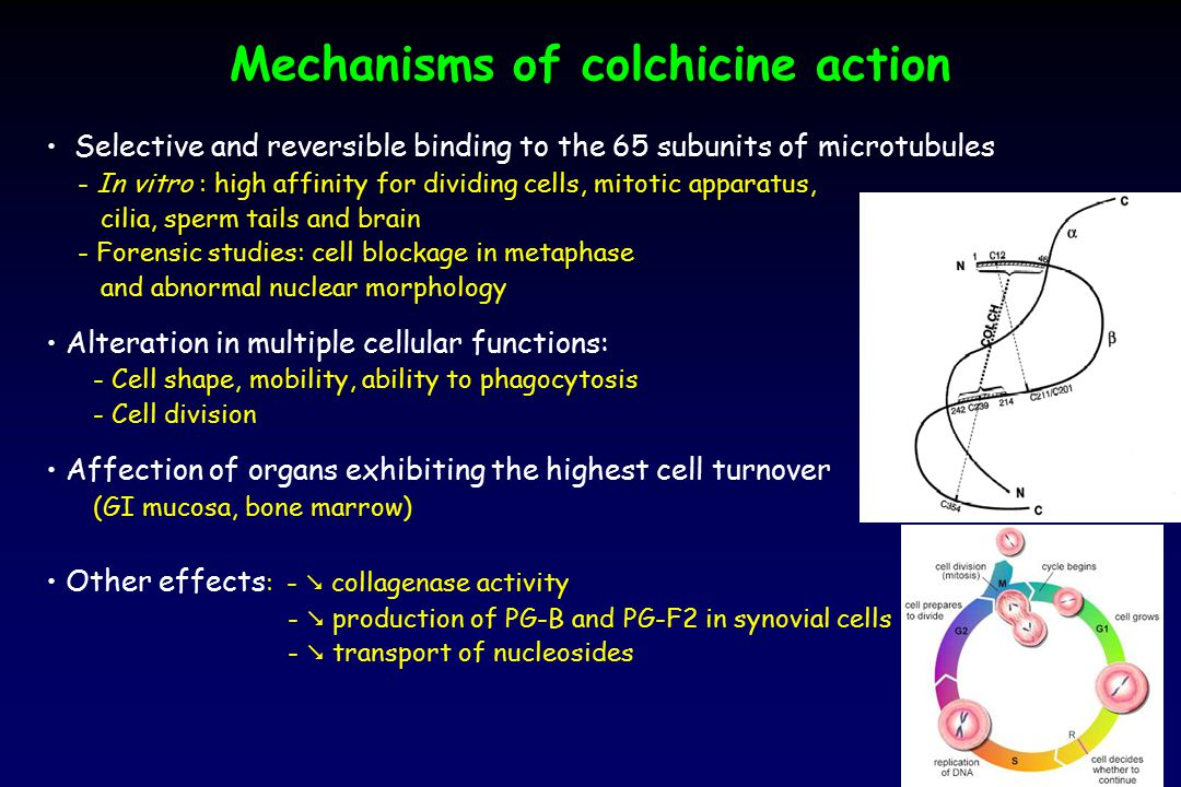 Case report (7) The patient's clinical improvement was explained by the direct effects of colchicine-specific Fab fragments: Redistribution from tissues into plasma Increase in plasma concentration Sequestration into plasma compartment High affinity of Fab to colchicine Immunoneutralization of the effects Decrease of protein-unbound colchicine (during 7h-infusion) and subsequent partial rebound (H12) Baud FJ.
