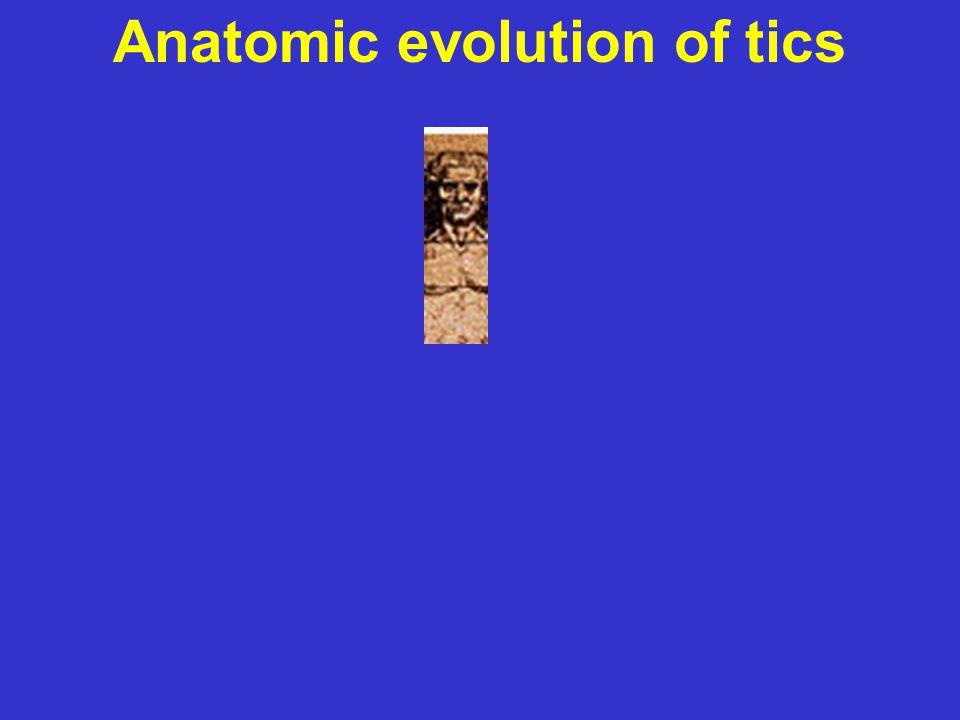 Anatomic evolution of tics
