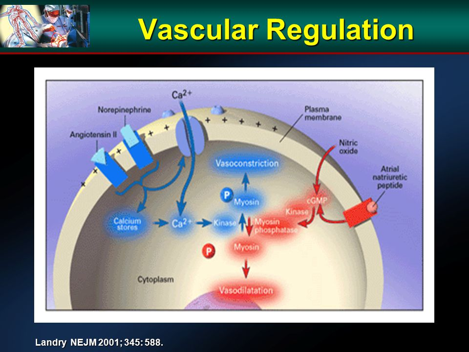Vascular Regulation Landry NEJM 2001; 345: 588.