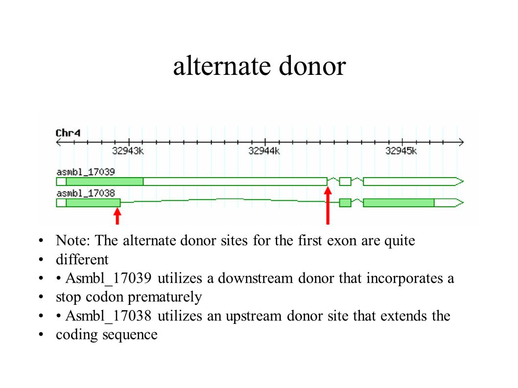 alternate donor Note: The alternate donor sites for the first exon are quite different Asmbl_17039 utilizes a downstream donor that incorporates a stop codon prematurely Asmbl_17038 utilizes an upstream donor site that extends the coding sequence
