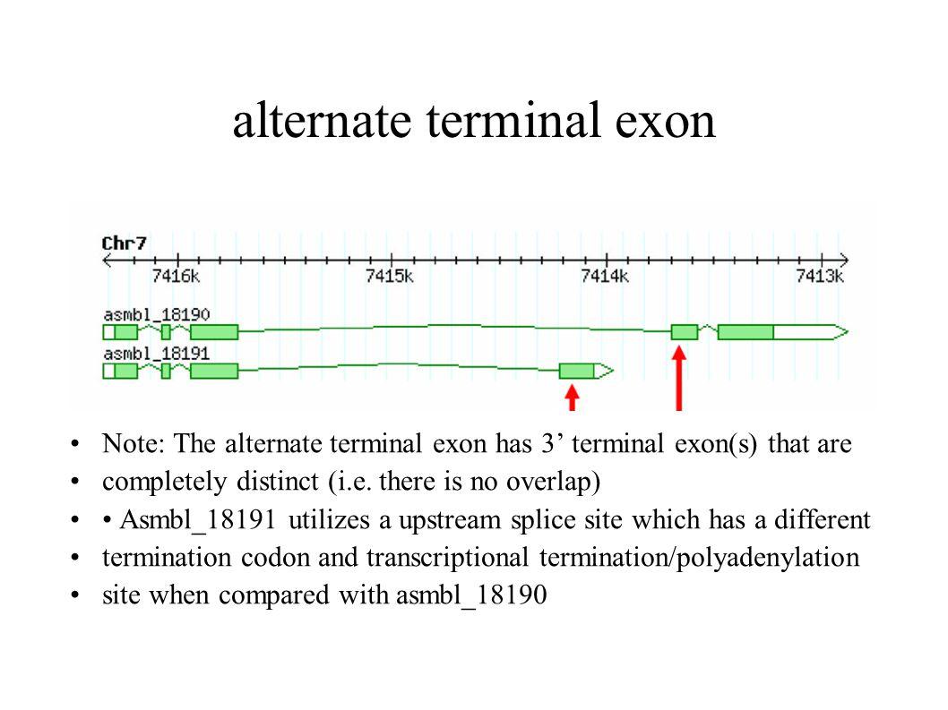 alternate terminal exon Note: The alternate terminal exon has 3' terminal exon(s) that are completely distinct (i.e.