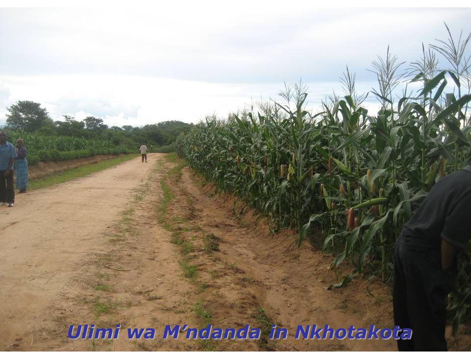 Ulimi wa M'ndanda in Nkhotakota