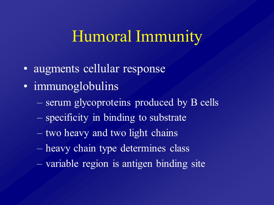 Humoral Immunity augments cellular response immunoglobulins –serum glycoproteins produced by B cells –specificity in binding to substrate –two heavy a