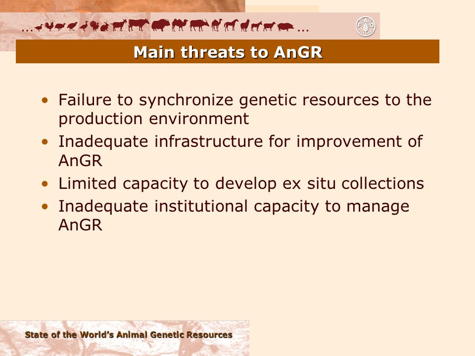 State of the World's Animal Genetic Resources Main threats to AnGR Failure to synchronize genetic resources to the production environment Inadequate infrastructure for improvement of AnGR Limited capacity to develop ex situ collections Inadequate institutional capacity to manage AnGR