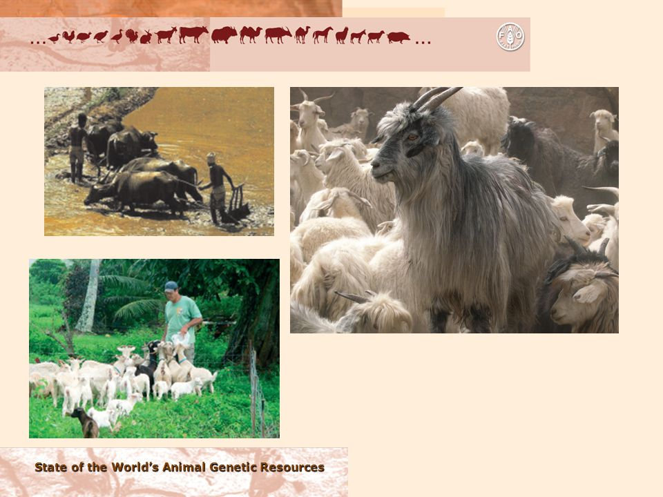 State of the World's Animal Genetic Resources