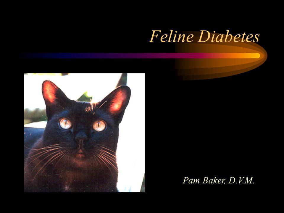 Feline Diabetes Pam Baker, D.V.M.