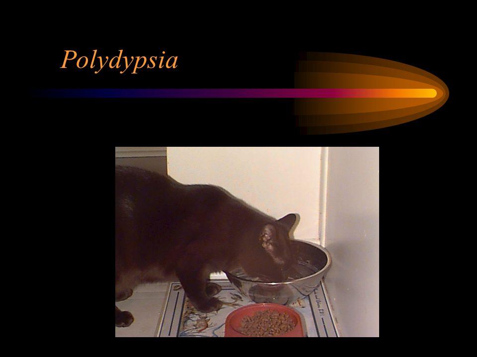 Polydypsia