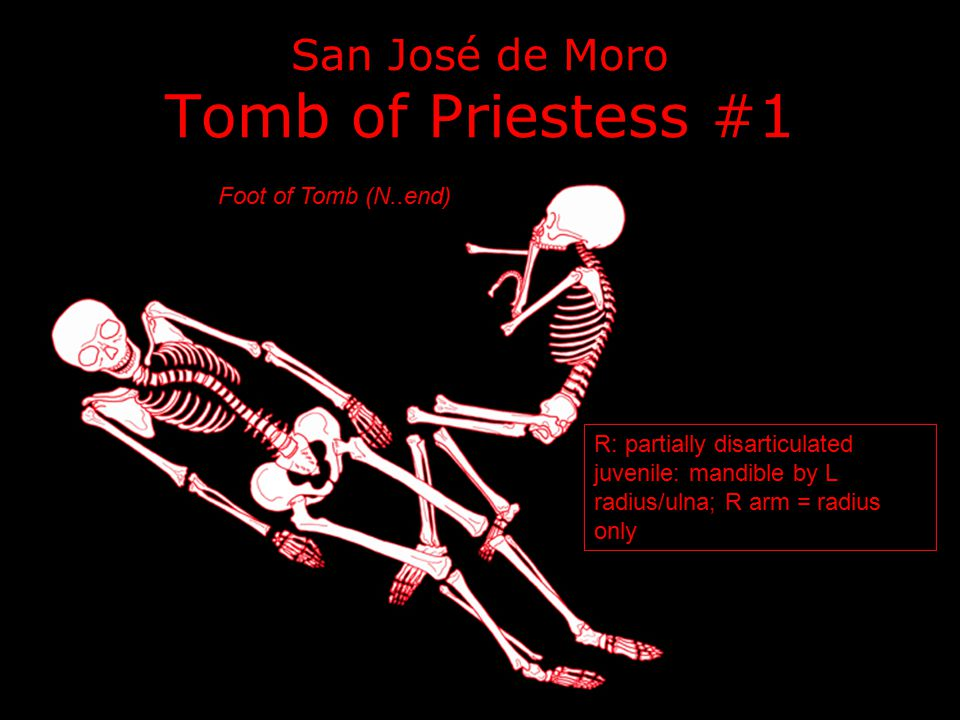 San José de Moro Tomb of Priestess #1 R: partially disarticulated juvenile: mandible by L radius/ulna; R arm = radius only Foot of Tomb (N..end)