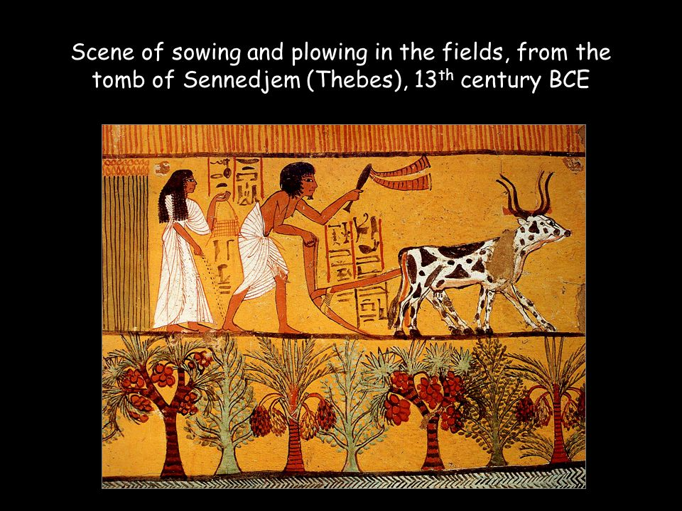 Scene of sowing and plowing in the fields, from the tomb of Sennedjem (Thebes), 13 th century BCE