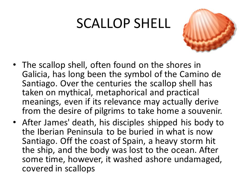 SCALLOP SHELL The scallop shell, often found on the shores in Galicia, has long been the symbol of the Camino de Santiago.