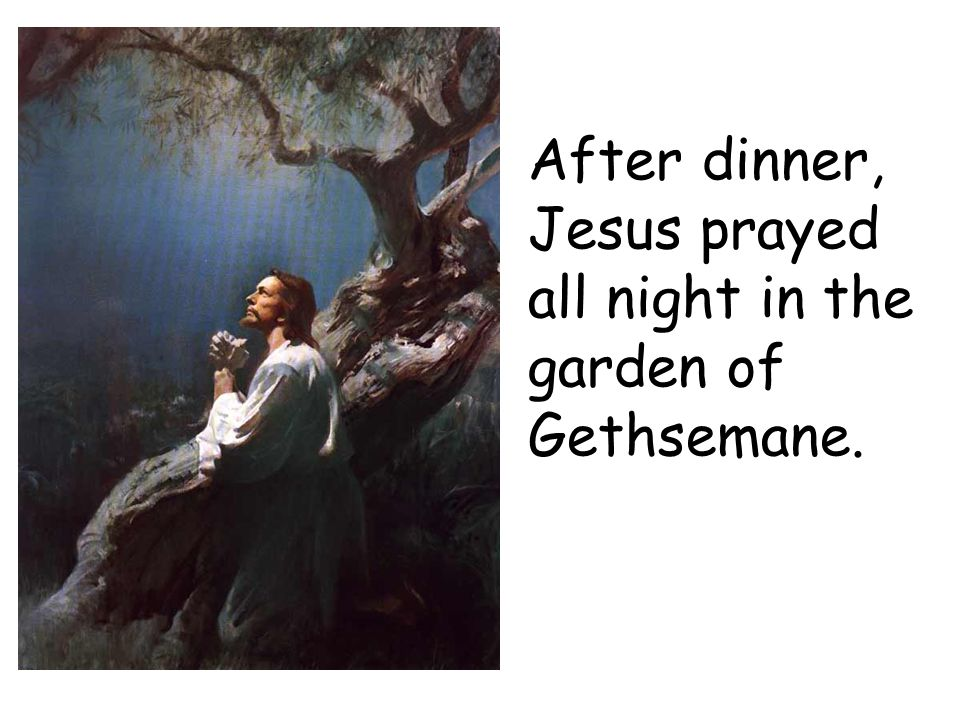 After dinner, Jesus prayed all night in the garden of Gethsemane.