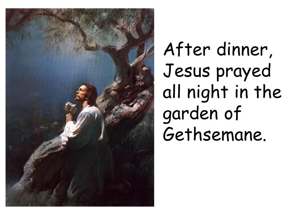 After dinner, Jesus prayed all night in the garden of Gethsemane.