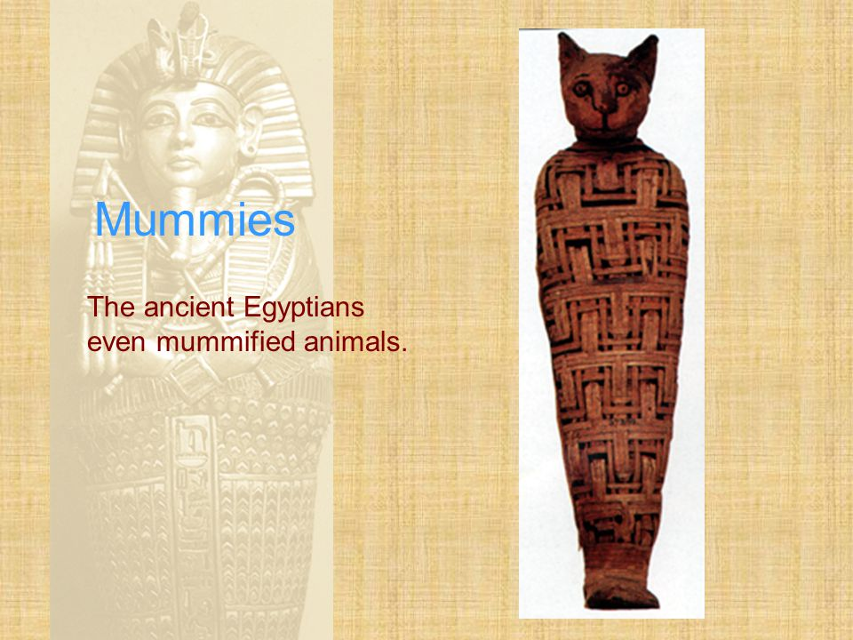 Mummies After embalming, mummies were carefully wrapped in yards of linen bandages.