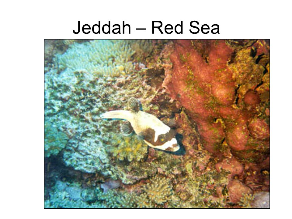 Jeddah – Red Sea