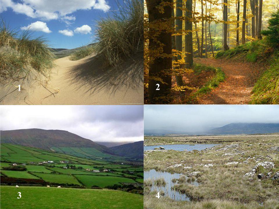 Burren - Boireann – Place of Stone Clints Grykes