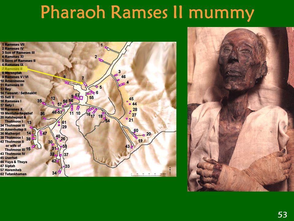 Pharaoh Ramses II mummy 53