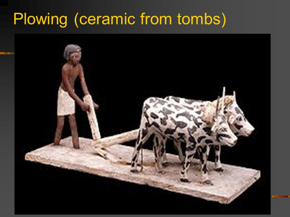 Plowing (ceramic from tombs)