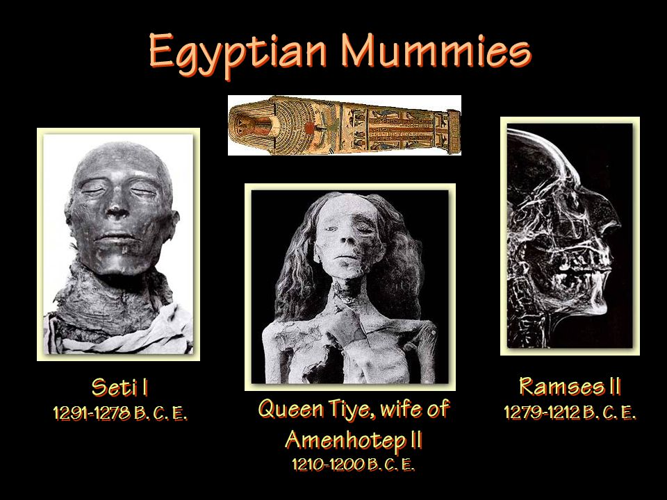 Egyptian Mummies Seti I 1291-1278 B. C. E. Queen Tiye, wife of Amenhotep II 1210-1200 B.