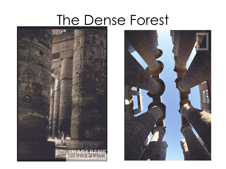 The Dense Forest