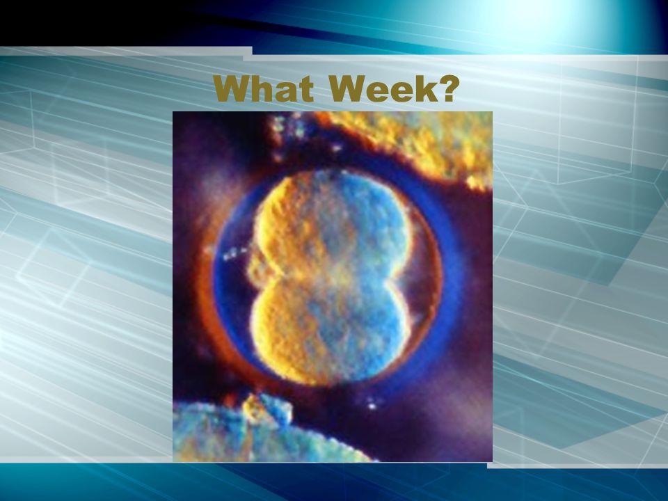 What Week?