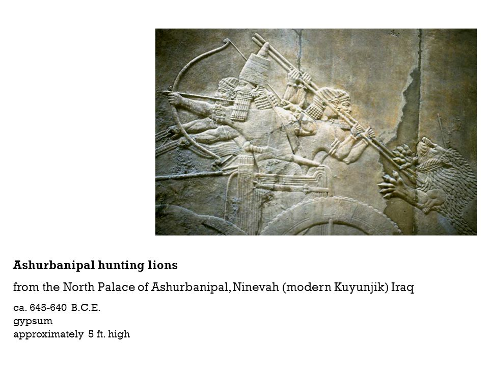 Ashurbanipal hunting lions from the North Palace of Ashurbanipal, Ninevah (modern Kuyunjik) Iraq ca. 645-640 B.C.E. gypsum approximately 5 ft. high