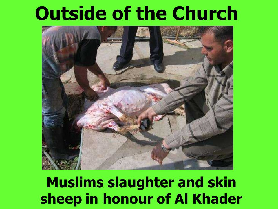 Outside of the Church Muslims slaughter and skin sheep in honour of Al Khader