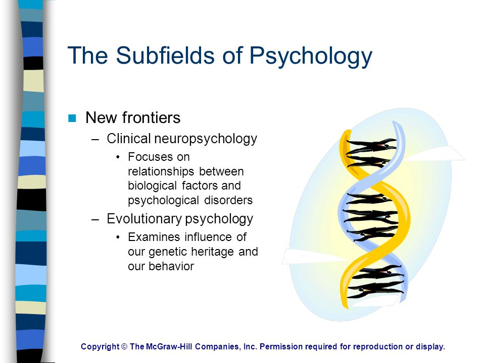 Copyright © The McGraw-Hill Companies, Inc. Permission required for reproduction or display. The Subfields of Psychology Understanding our social netw