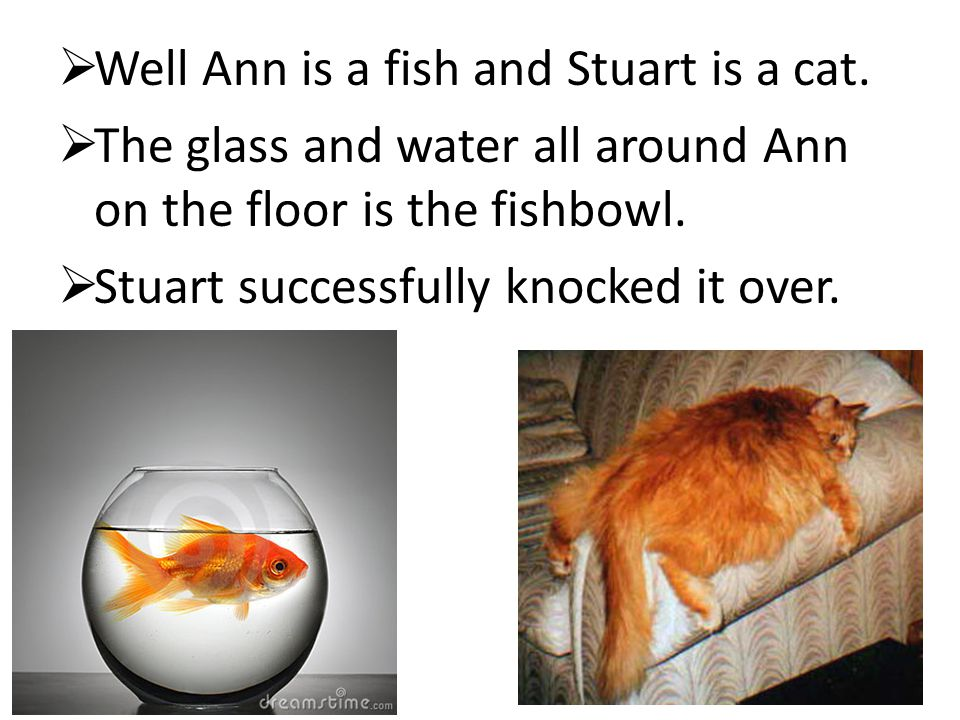  Well Ann is a fish and Stuart is a cat.