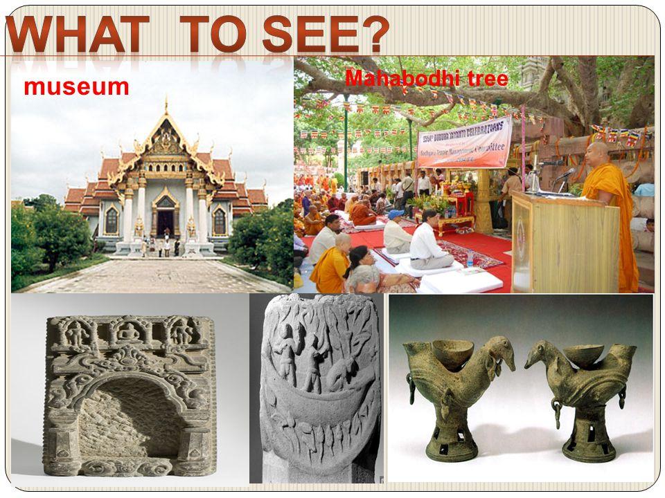 museum Mahabodhi tree