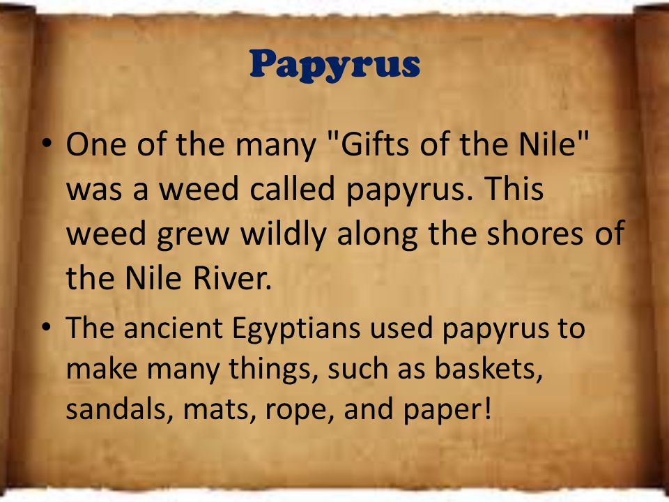 Papyrus One of the many Gifts of the Nile was a weed called papyrus.