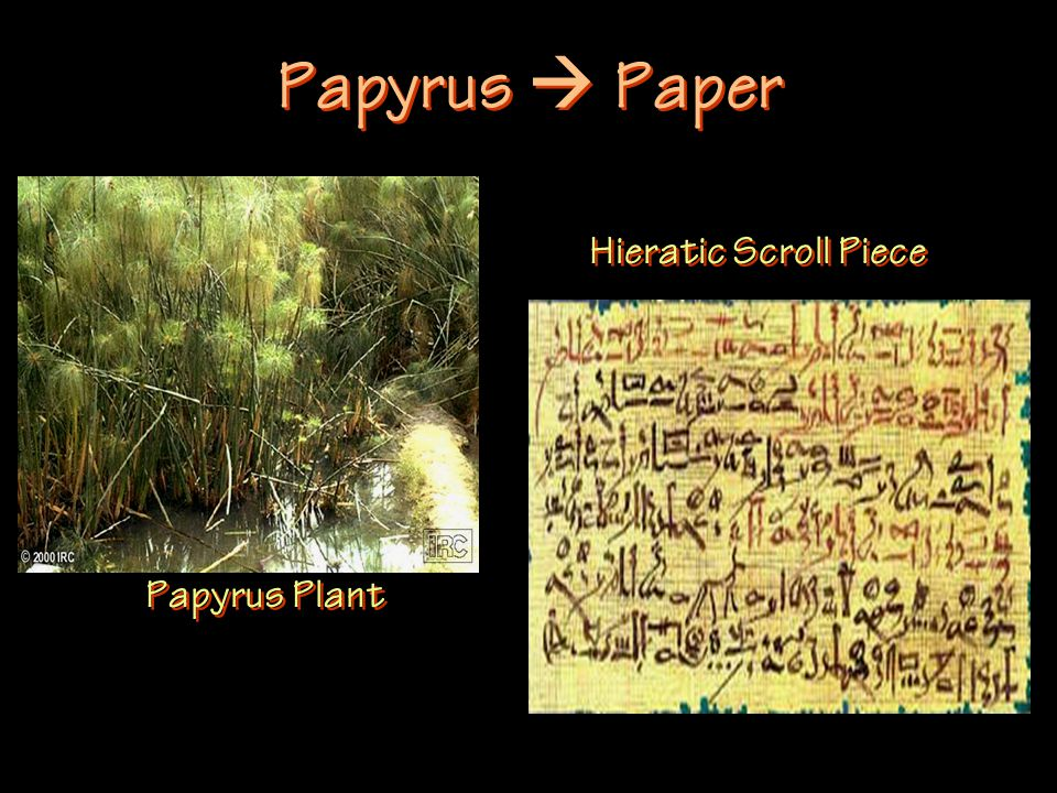 Papyrus  Paper Papyrus Plant Hieratic Scroll Piece