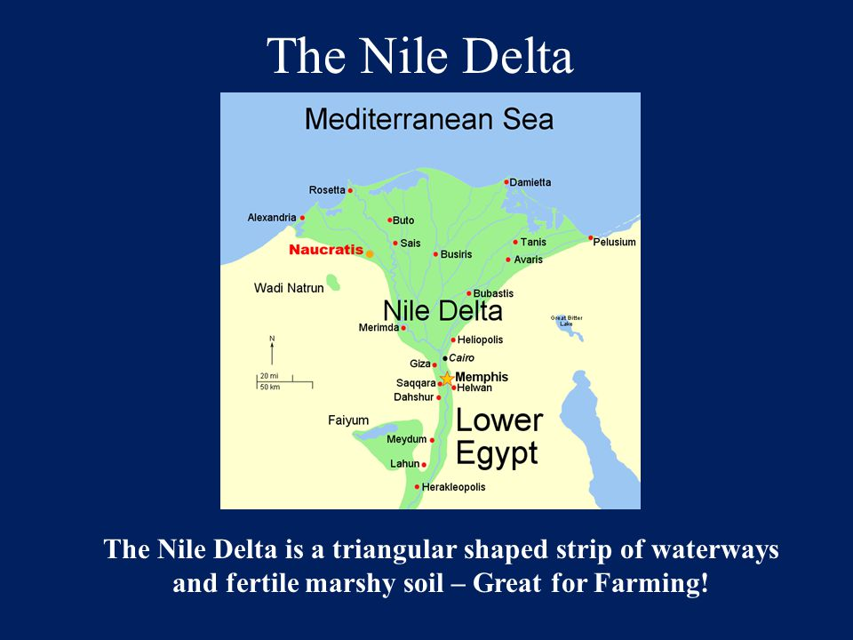 The Nile Delta The Nile Delta is a triangular shaped strip of waterways and fertile marshy soil – Great for Farming!