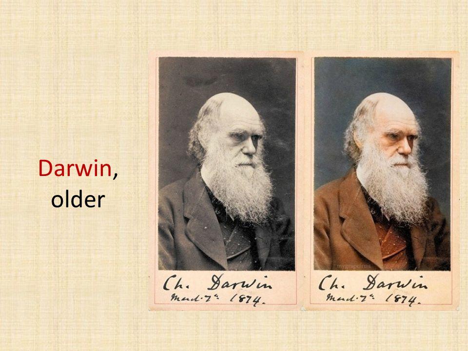 Darwin, older